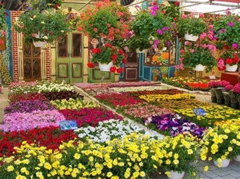 giardini in fiore foto balconi e giardini in fiore a piana crixia arriva