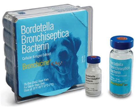 bordetella vaccine dogs vets animal hospital