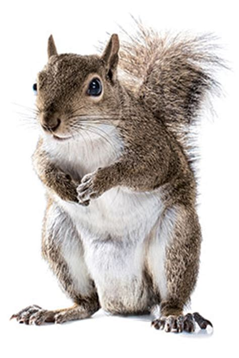 Best Home Design Stores Nyc A History Of Squirrels In New York New York Magazine