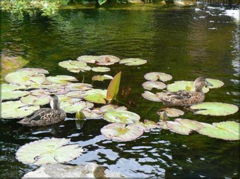 un bassin aquatique et pourquoi pas des canards