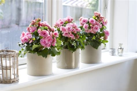 Flowers For Windowsill Decoration 57 Ideas As You Discover The Potential Of