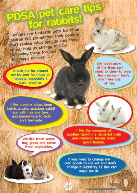 8 Tips On Caring For Pet Rabbits by 273 Best Images About Infographics On Cats