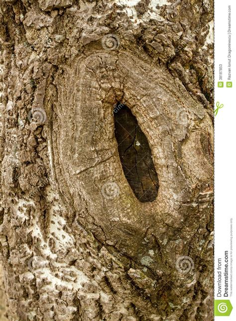 skin the color of bark bark texture detail stock photos image 38187853