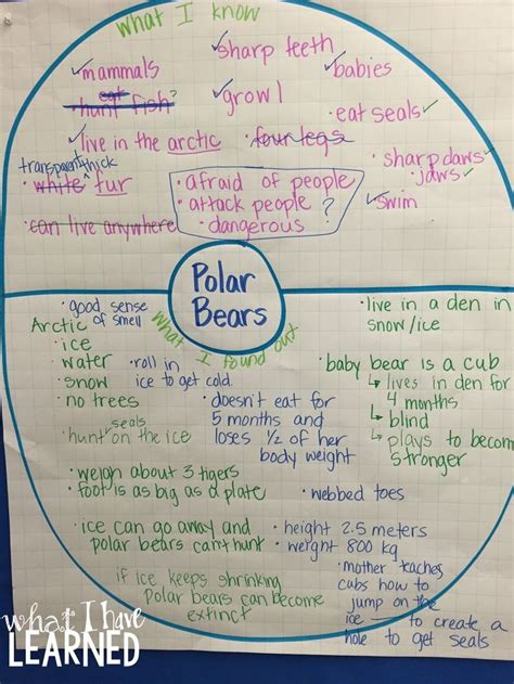 Expository Essay Maps by 16 Best Images About Thinking Maps On Paragraph Comprehension And Icons