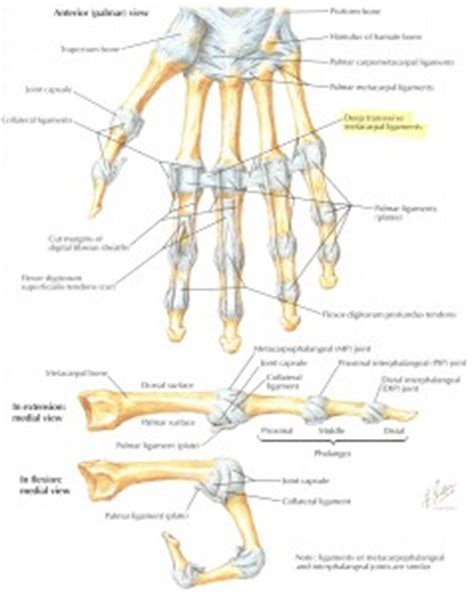 Joint Layout Directed   do you suffer from quot lax ligaments quot osteopathic pain