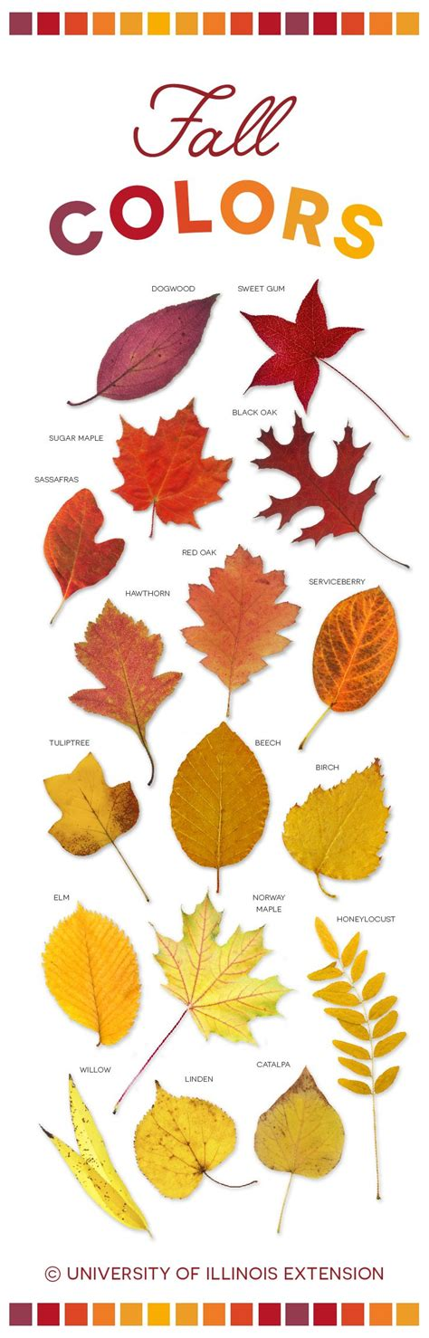 leaf colors best 25 autumn leaf color ideas on fall leaf