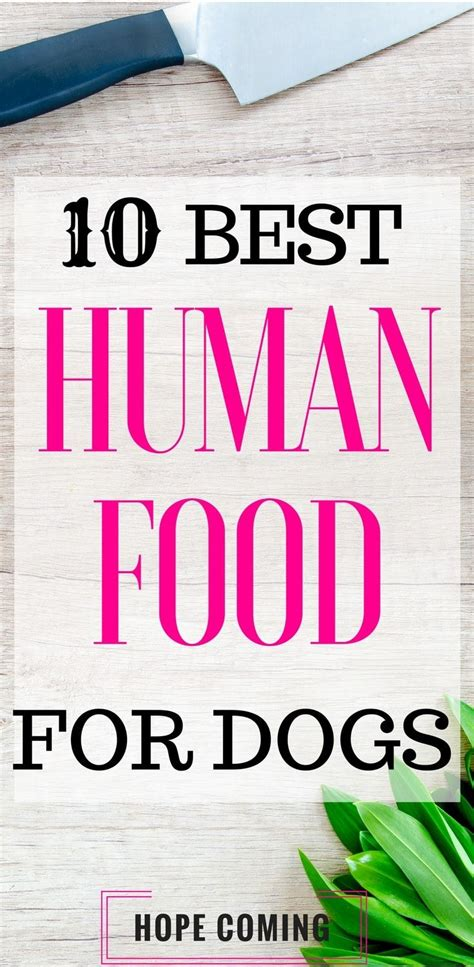 is yogurt bad for dogs best 25 human food for dogs ideas on care foods dogs can eat and