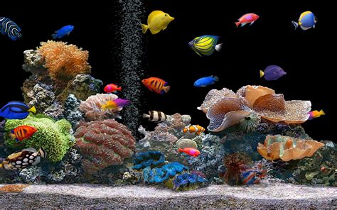 Wallpaper Colorful Fish And Interactive Water | aquarium wallpaper 120085