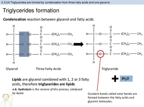2 3 carbohydrates and lipids bioknowledgy 2 3 carbohydrates and lipids