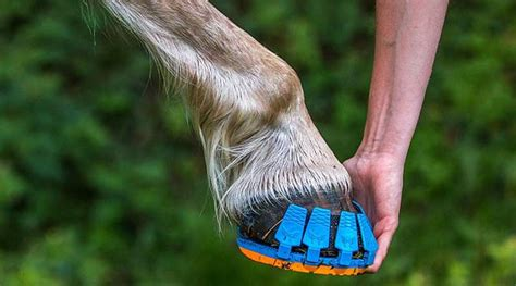 shoes for horseback clip before you clop new clip on horseshoes get