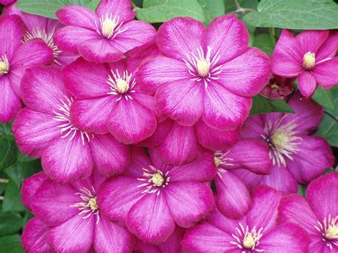 Esmonia Lopperio Flower my floral bouquet 1 kidhelper