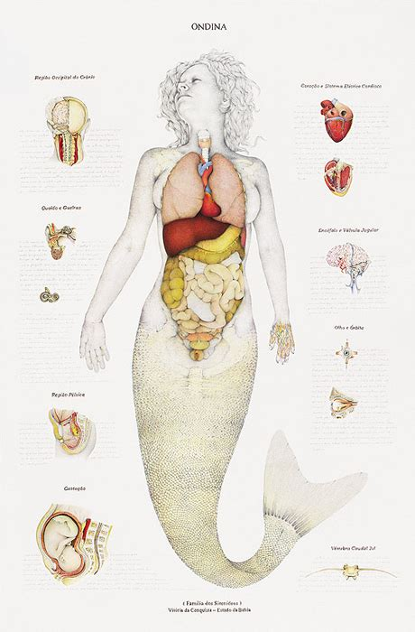 ondina ondine anatomical drawings of mermaids nymphs and monsters flavorwire