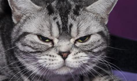 Tante foto di gatti (di tutte le razze che oggi conosciamo