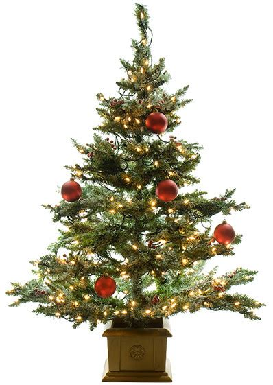 contact us american christmas tree association