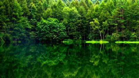 green japanese wallpaper beauty green nature wallpaper siudy net