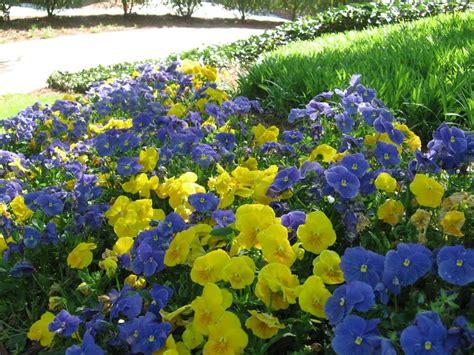 color garden favorite garden color combos hgtv