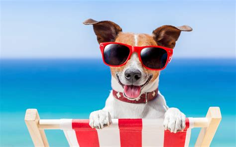 the days of summer 4 pet products for the days of summer
