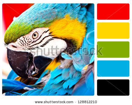parrot green color palette complimentary colors stock photos images pictures
