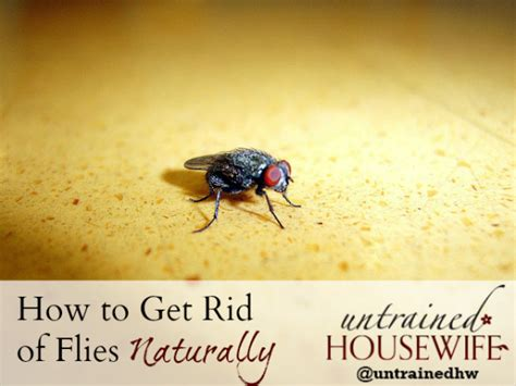 how to get rid of flies inside and outside