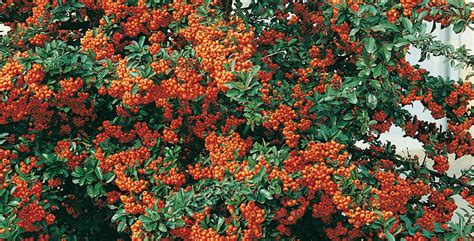 piante invernali da giardino piante da giardino invernali come riconoscerle e coltivarl