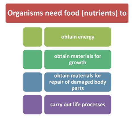 carbohydrates for class 7 class 7 cbse science nutrition in plants nutrients in plants