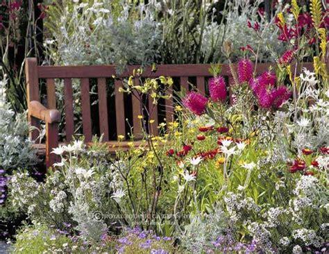 australian plants garden inspiration