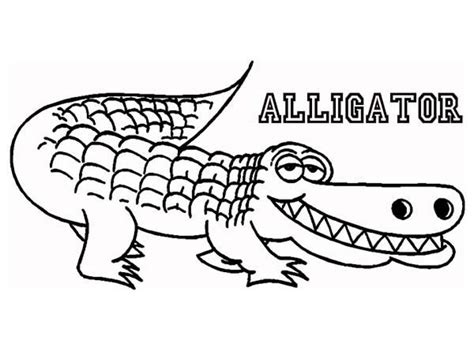 crocodile full size of coloring pagesalligator coloring