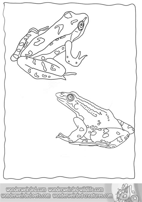 Realistic Animal Coloring Pages by Realistic Frog Coloring Pages Wonderweirded Wildlife