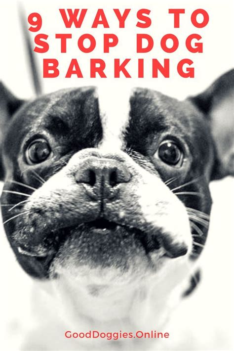 dog barks when we leave 25 best ideas about dog barking at night on pinterest