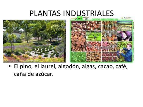 que es layout de plantas industriales las plantas yolanda reinoso