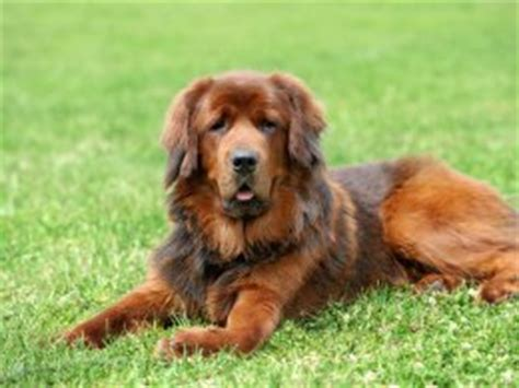 deworming puppies what to expect worming your puppy more information and what to expect pets4homes