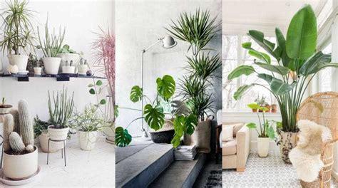 decorar interiores modernos plantas de interior en decoracion para salones modernos