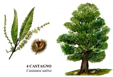 come si chiamano i figli dei fiori cucina e cammino riconoscere gli alberi