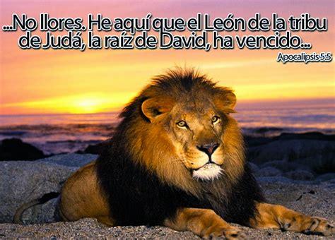 imagenes de leones de zona ganjah imagen p 225 gina 8 las cartas de magie