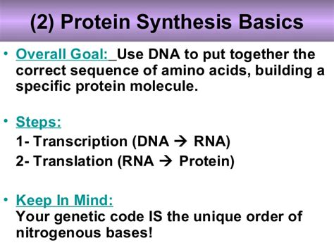 6 protein synthesis steps biology unit 6 dna rna protein synthesis protein synthesis