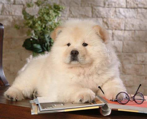 top ten cutest dogs top 10 cutest breeds on imgfave
