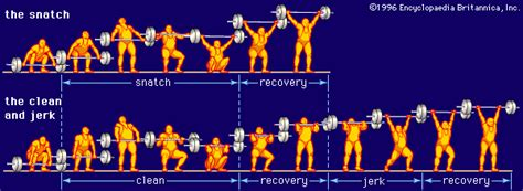 Olympic Weights Bench Size Vs Strength The Hypertrophy Phase Wet Palate