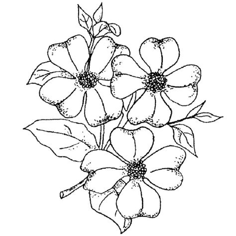 coloring page of dogwood flowers free coloring pages
