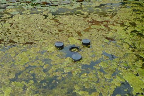 Wasser An Der Decke Was Tun by Algen Im Gartenteich Gartenteich Planung Bau Und Pflege