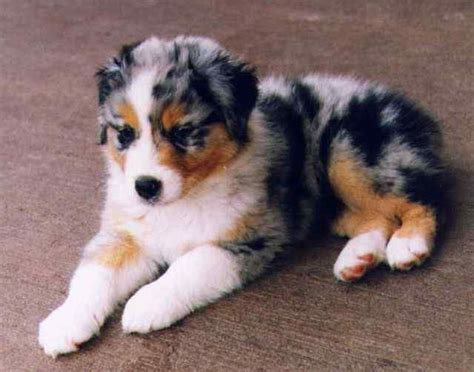 breeds medium 50 best dogs to look at when i feel blue images on adorable animals