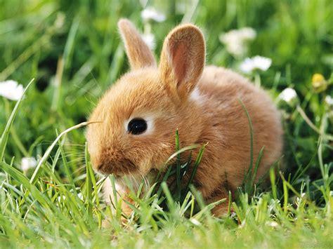 and rabbit bunny wallpapers bunny rabbits wallpaper 128639 fanpop