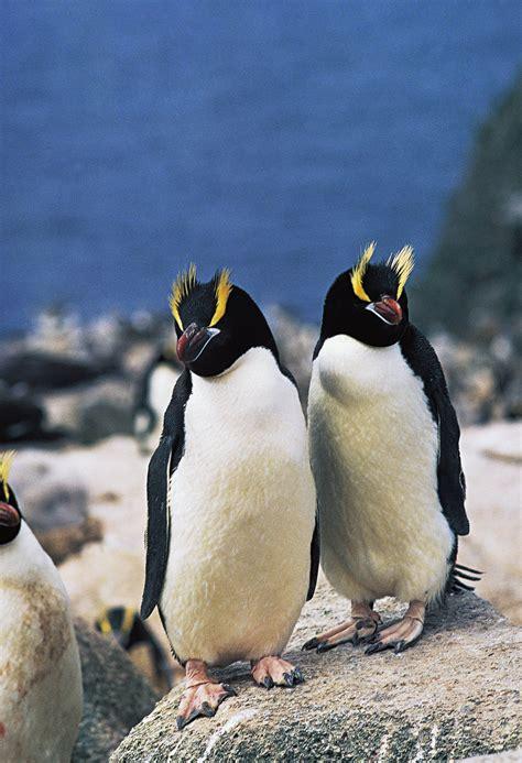 Penguin S world penguin day 2017 11 penguin species facing