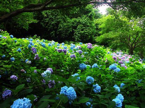 Buy Garden Flowers Flower Garden Wallpapers
