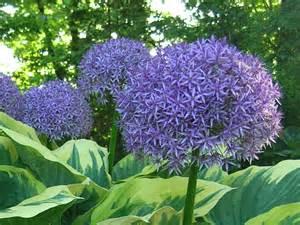 Planting A Perennial Flower Garden Companion Planting Bulbs With Perennials