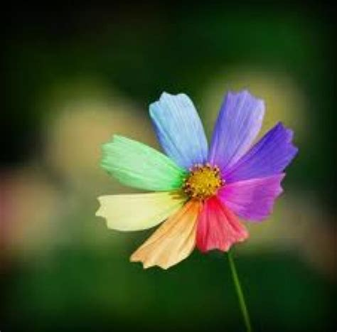fiore flowers la valigia dei colori fiore arcobaleno