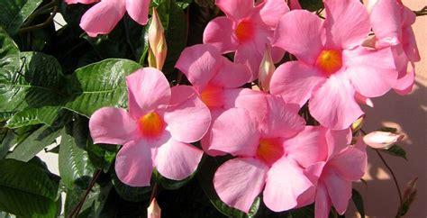 potatura piante da giardino piante ricanti da vaso ricanti ricanti da vaso