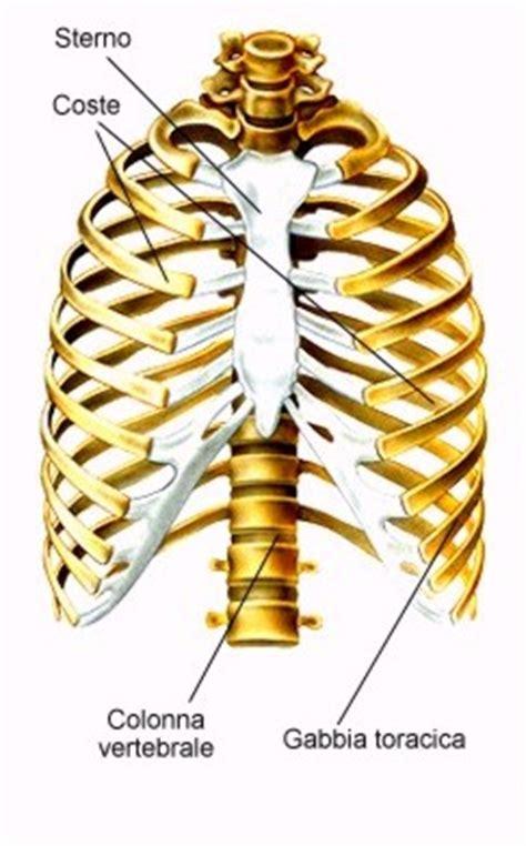 gabbia toracica ossa gabbia toracica