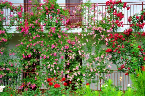 vertical gardening innovative solutions for small gardens