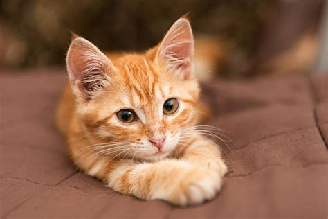 and cat pictures cats pictures images and stock photos istock