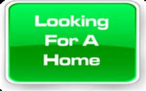 wanted house wanted to rent in bolton in bolton ontario